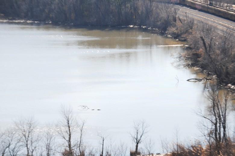 Análisis del agua en el Santuario Roaches Run Waterfowl dieron positivo a la presencia de aceite. Foto: Cortesía/Guardia Costera.