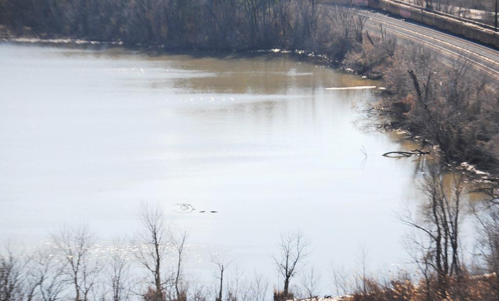 Investigan procedencia de aceite en el Potomac
