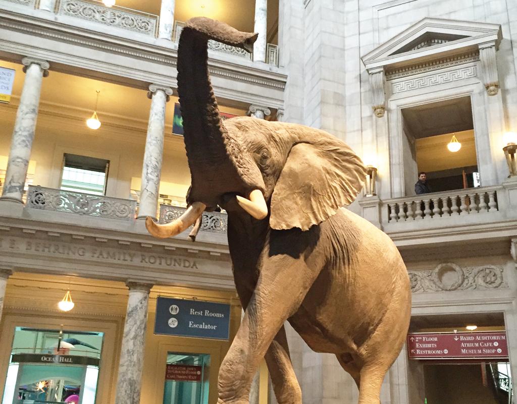 Día del Museo en el Smithsonian