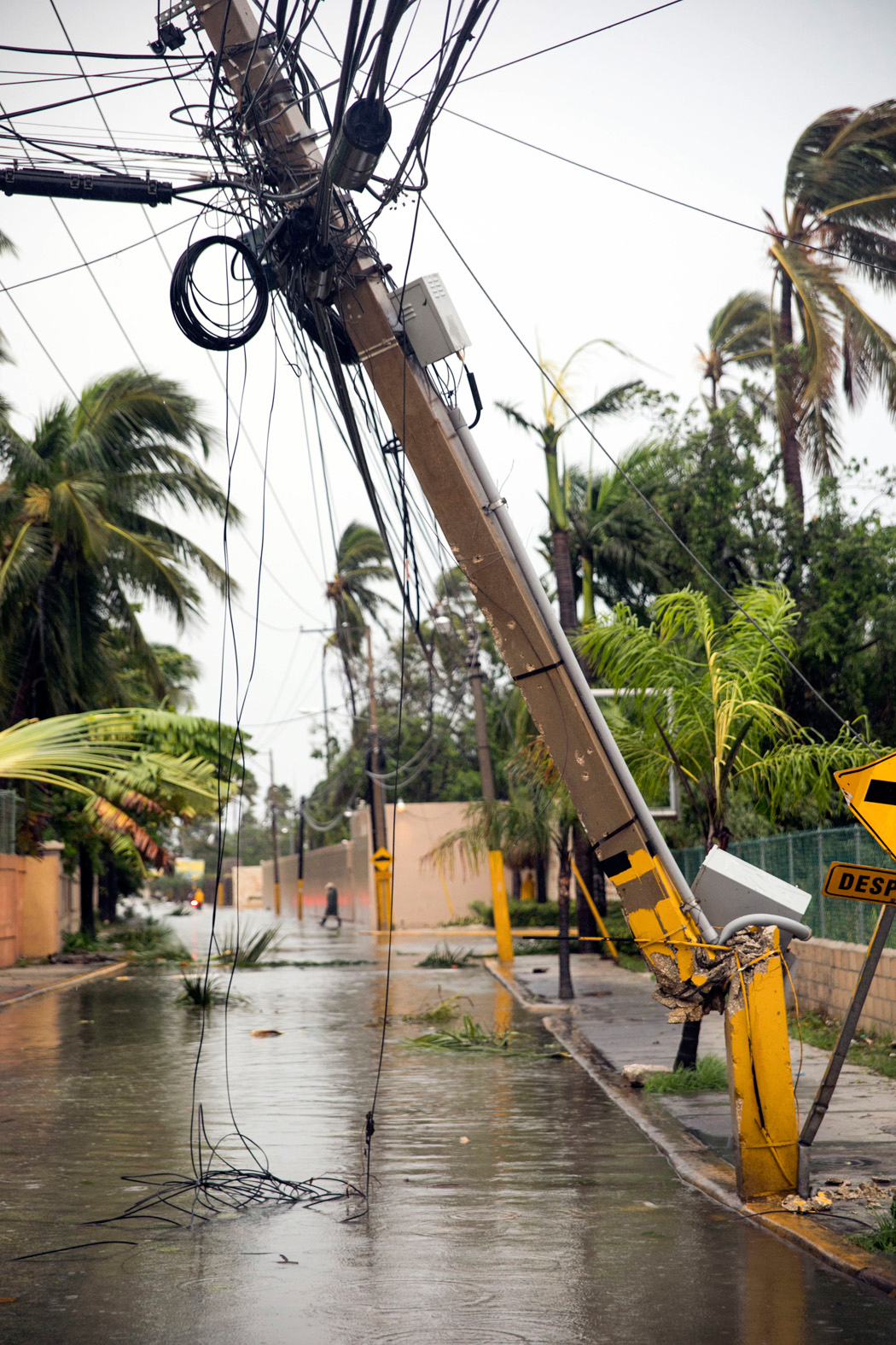 Electric cables and palms lay on the ground after the crossing of Hurricane Maria over Bavaro, Dominican Republic, Thursday, Sept. 21, 2017.  Rain from the storm will continue in the Dominican Republic for the next two days according to meteorologists. (AP Photo/Tatiana Fernandez)