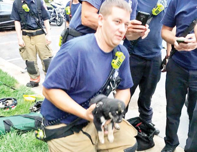 Rescatan cachorro en condado de Montgomery