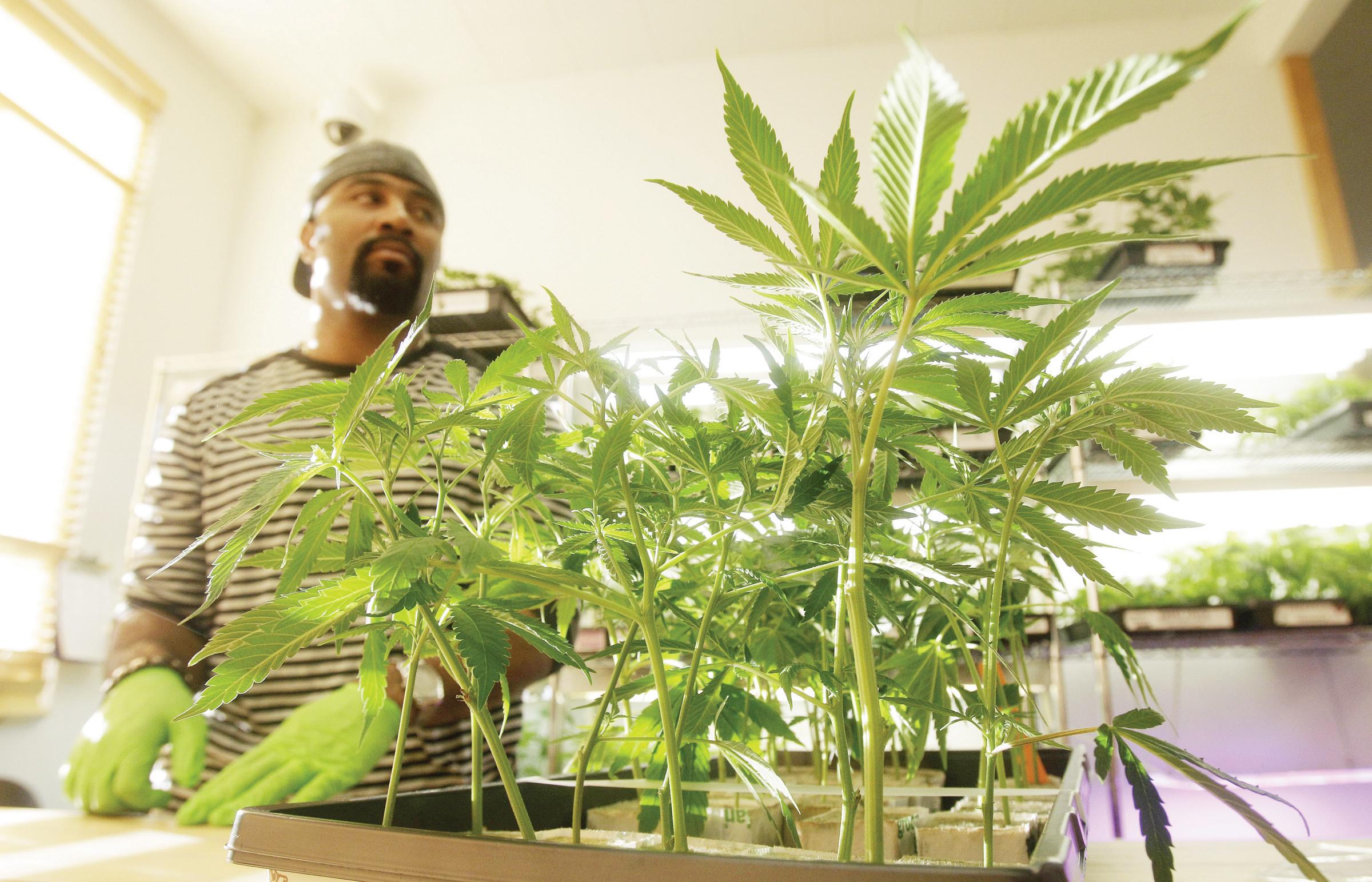 DC apuesta por la venta de marihuana