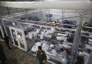 EEUU: Niños migrantes desesperados por salir de albergues