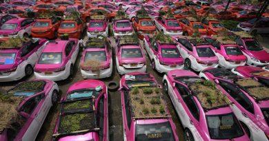 Plantan vegetales en los techos de los taxis en Tailandia